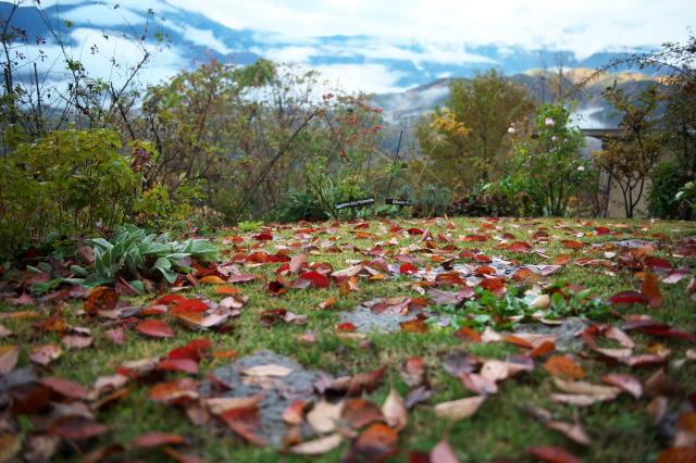 秘密基地の秋模様-落ち葉