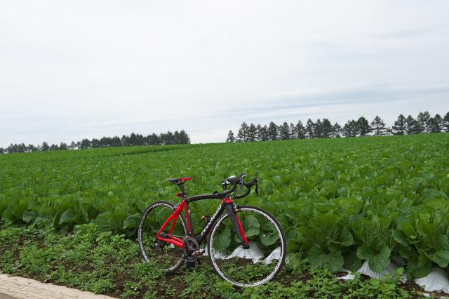 Pinarello Princeと野辺山-白菜畑