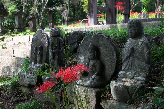 清泰寺の石仏