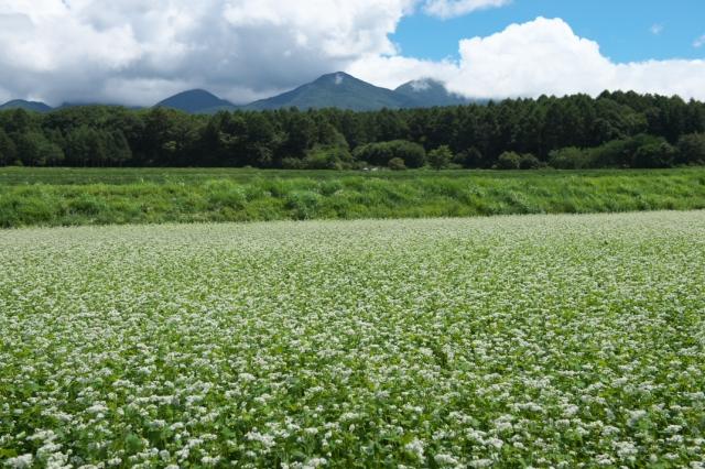 高原の蕎麦畑-01