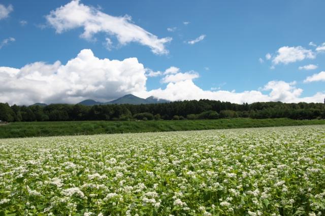 高原の蕎麦畑-02