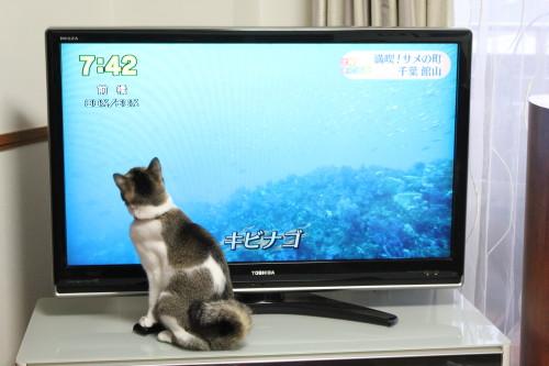 テレビっ子1