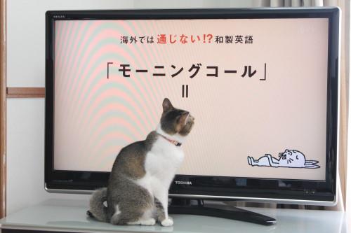 テレビっ子2