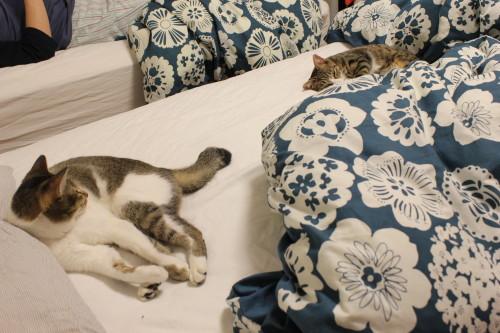 2人ベッド1