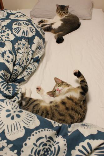 2人ベッド3