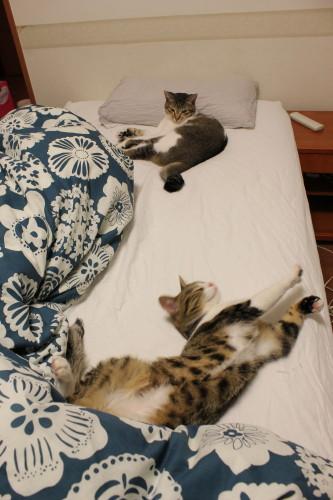 2人ベッド4