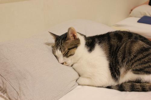 ベツヲ枕1