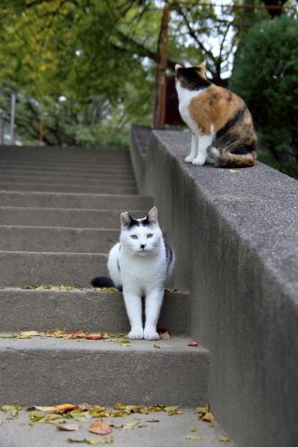 階段のふたり