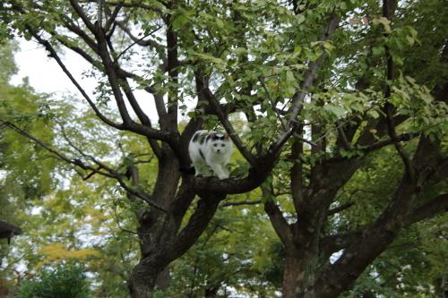 木登りまろ