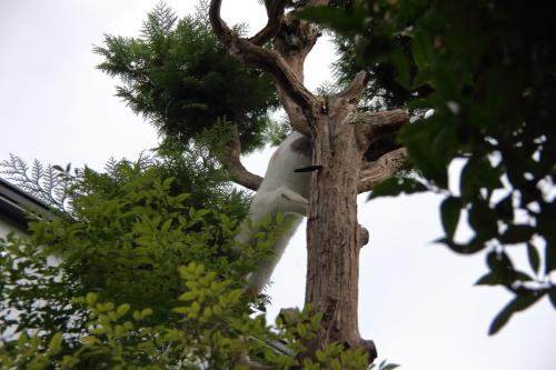 木登りくる1
