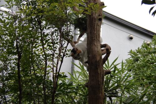 木登りくる2