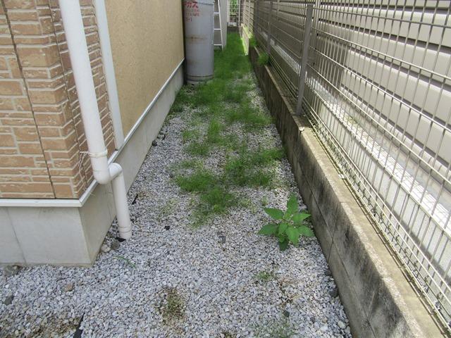 スギナがいっぱいの裏庭