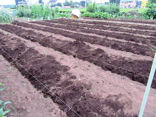 大豆畑の準備