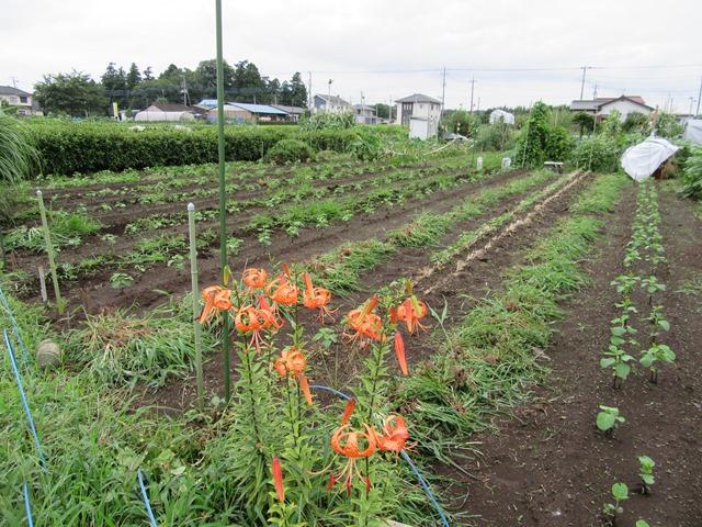第二弾の大豆畑の草取り完了