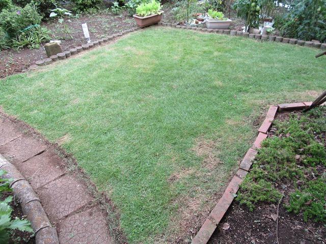 刈り込みが済んだ芝生