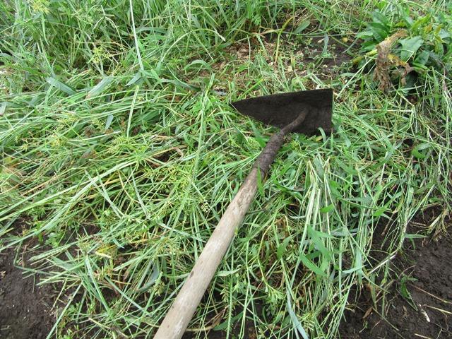 この三角ぐわで草の根元から刈り込んでゆく