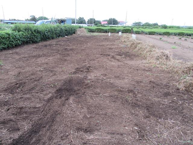 カボチャ畑の片付け完了