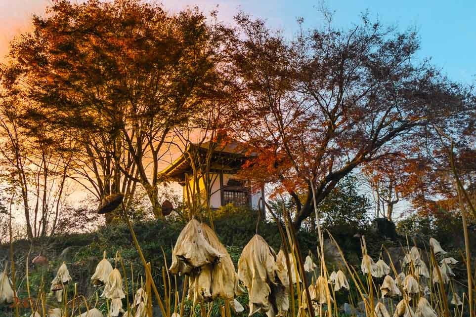 201061126常楽寺10