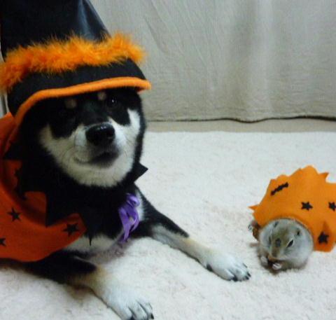 Halloween ソンさん2010