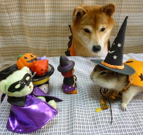 Halloween ソンさん 2011