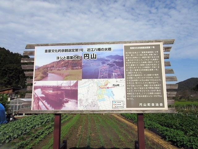 町内会の旅行で近江八幡の水郷巡りに行きました(^^♪