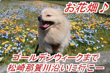 banihanasin_201604260215227f1.jpg