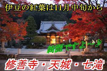 kouyo_20161101014347c40.jpg