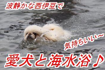 umimiro1_2016082402091724f.jpg