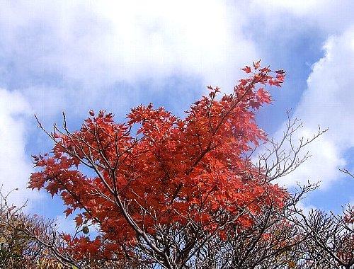 栗駒山-13日001