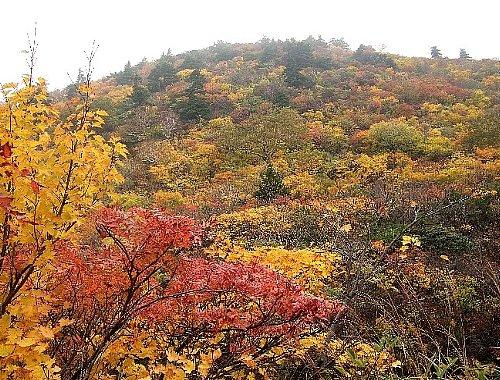 栗駒山-14日004