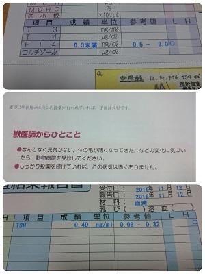 甲状腺数値検査結果1
