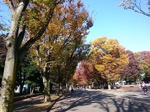秋真っ只中