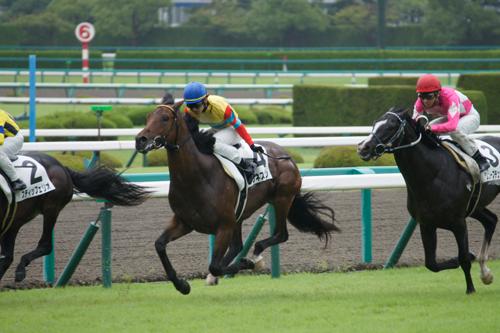 阪神5レース