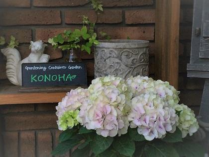 KONOHA (2)