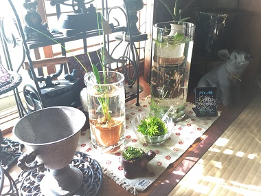 メダカ鉢 (2)