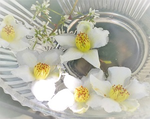 ヒメシャラ (2)