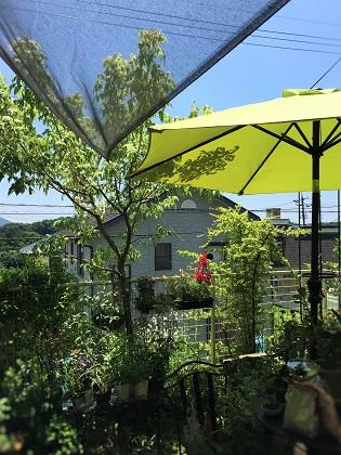 KONOHAの庭2016夏