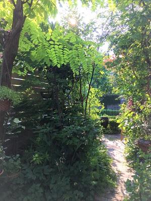 KONOHAの庭Before