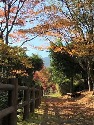 20161116彩が丘 (6)