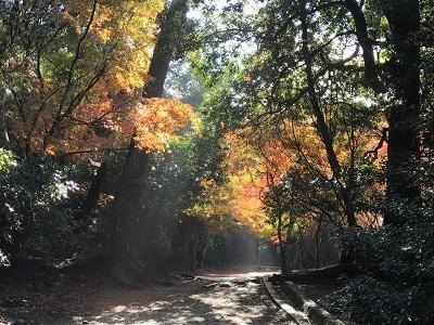 201611宮島 (5)