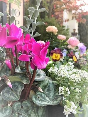 KONOHAの庭 (4)