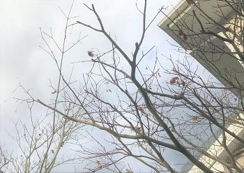 冬の剪定 (2)
