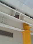 道の駅おおがたのツバメの巣