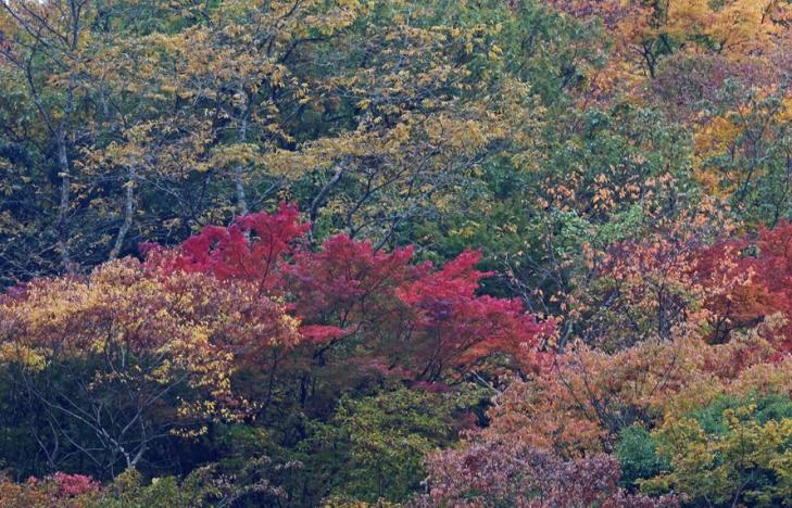 1114_渓谷の紅葉