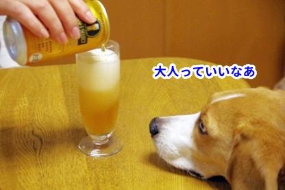 モラ ビール2
