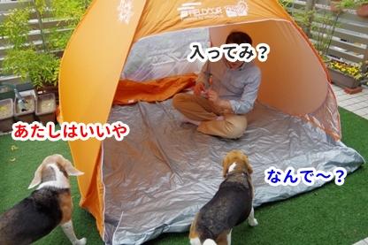 テント 6