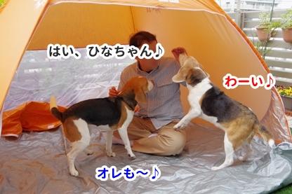 テント 7