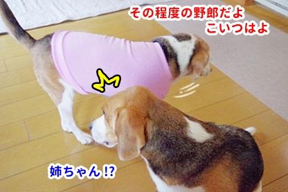 ピンク 4