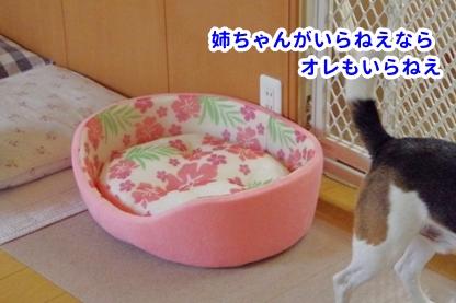 ベッド 5