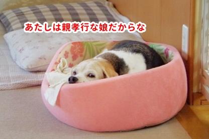 ベッドその後